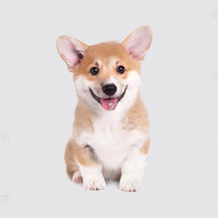 如何为幼犬准备新家生活?